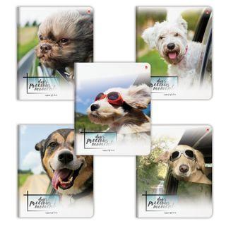 Notebook A5, 48 sheets, ALT, staple, cage, foil, hybrid varnish,