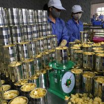 CANNED PINEAPPLE WHOLESALE (EXPORTER-VIETNAM)