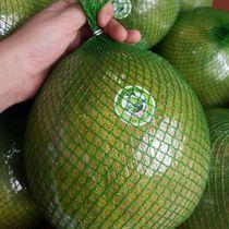 Pomelo (Citrus maxima, Citrus grandis)