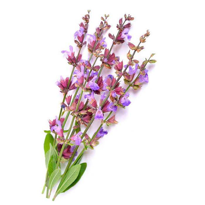 Clary sage flower water