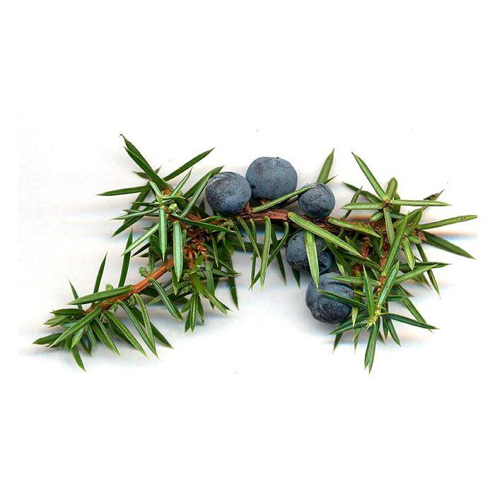 Oil of juniper berries