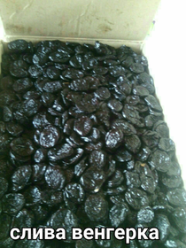 Prunes (Hungarian sweet) sunny