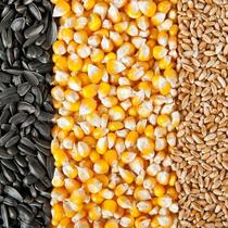 Grain and oilseeds