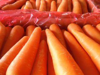 Fresh carrots Gimex