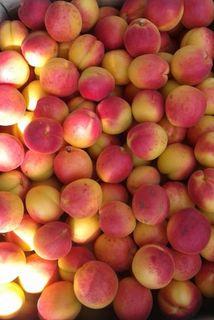 Apricots harvest 2019