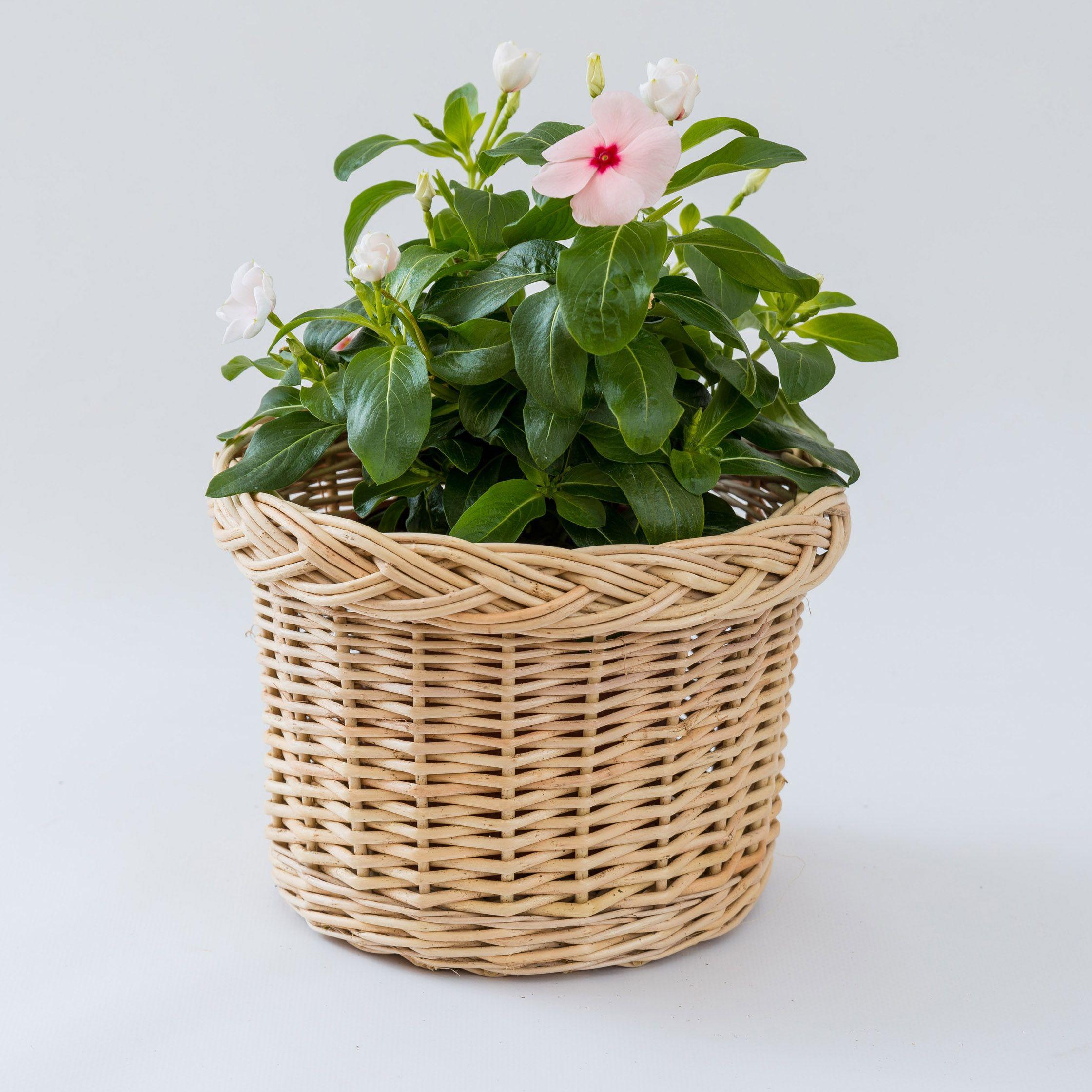Braided flower pot