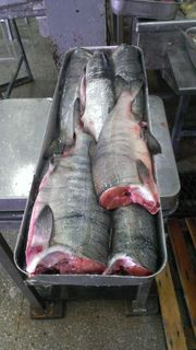 Chum salmon fresh frozen