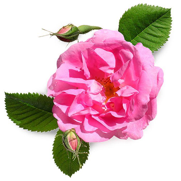 Floral rose water