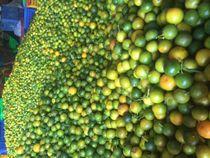 CALAMANSI FRUIT