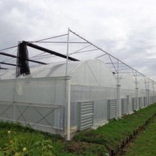 Greenhouse - Greenhouses