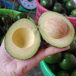 FRESH AVOCADO FRUIT (HASS, WAX, BOOTH,...)
