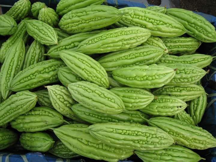 AMARO secco, frutta, MELONE acquistare su Global Trade Ita