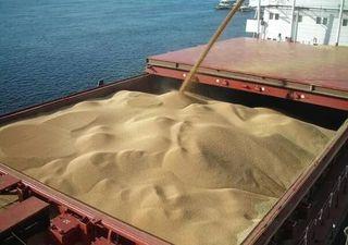 Пшеница зерно 5 класса (фураж)