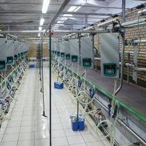 Milking halls 'Herringbone'