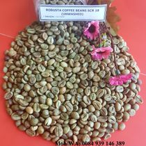 UNWASHED ROBUSTA COFFEE BEANS SCR 18 - HIGH QUALITY - GOOD PRICE