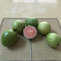 DRIED GUAVA. GUAVA DRIED 100% NATURAL ORGANIC (EXPORTER VIETNAM)