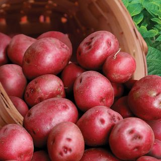 Potatoes Cardinal Diamond Granola