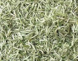 White-leaf tea