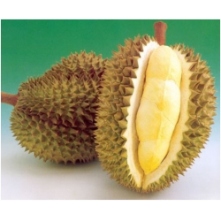"Durian - ""King of All Fruits"""