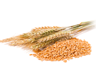 WHEAT SOFT OF ALL VARIETIES GOST 9353-90