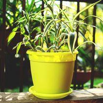 GENOVA green pot with plate 18 cm