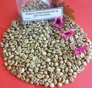 WASH POLISHED ROBUSTA COFFEE BEANS SCR 18 - HIGH QUALITY