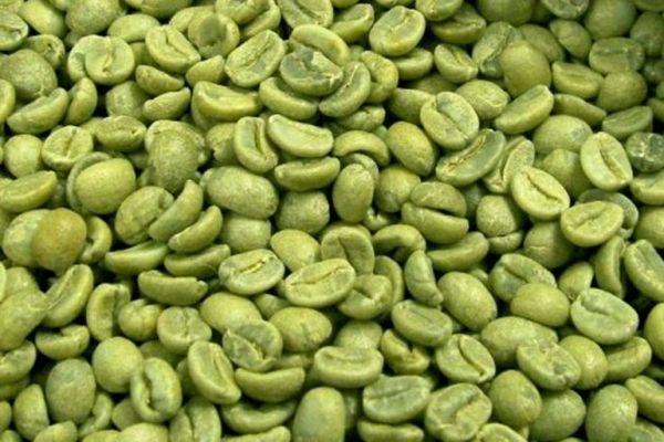 ARABICA COFFEE WASHED S18
