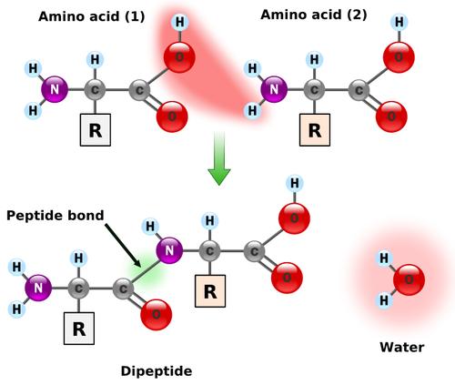 Non-protein amino acids