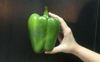 Fresh capsicum bell pepper