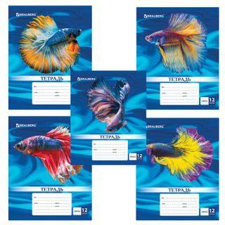 Notebook 12 sheets BRAUBERG, cage, cardboard cover, MAGIC FISH