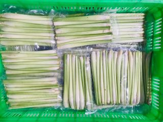 CITRONELLA / LEMONGRASS